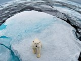 US plans to save polar bears are toothless, says climate scientist